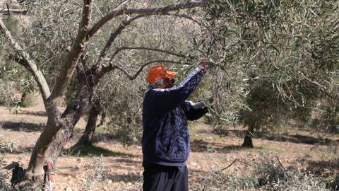 محتلون صهاينة يعتدون مزارعين فلسطينيين 92f37c57645e411e87bc1ca605caf4ae.jpg?itok=0md0MRoL